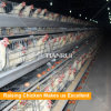 Chicken frame cage system automatic chicken farming system