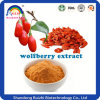 Dried Goji Berry Orgnic Goji Berries Extract