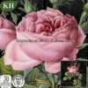 100%Pure Natural Rose Essential Oil, Distillation, Citronelol 21%, Geraniol 8%