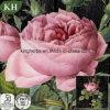 100%Pure Natural Rose Essential Oil, Distillation, Citronelol 21%, Geraniol 8%
