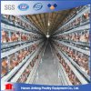 H Type Jinfeng Automatic Chicken Cages for Layer Farm