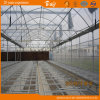 Good Heat Insulation Performance Film Greenhouse for Seeding
