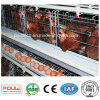Automatic Poultry Farm Layer Chicken Cage Equipment