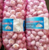 10kg Mesh Bag Packing Fresh Normal White Garlic