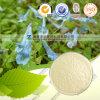 High Quality Naural Rhizoma Corydalis Extract Tetrahydropalmatine