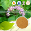 Factory Direct Supply High Quality Allium Macrostemon Extract