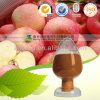 Natural Apple Extract /98% Phloretin