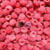 New Crop Frozen IQF Raspberries
