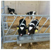 Heave Duty Horizontal /Diagonal Calf Fending Fence Feed Barriers