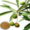 Natural Olive Leaf Extract (Hydroxytyrosol 40%)