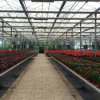 Hot Sale Agriculture Multi Span Glass Greenhouse for Flowers