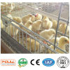 The Chicken Cages System Equipment of Pullet (Small) Chicken