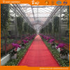 High Quality Venlo Structure Greenhouse