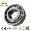 Freewheel Bearing Gc-B Roller Type Bearing