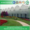 Multi Span PE Film Greenhouse