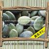 Chinese Pumpkin Seed Kernels Grade AA