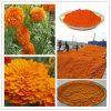 Natural Lutein/Lutein /Zeaxanthin/Marigold Flower Extract