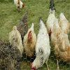 Hexagonal Wire Mesh for Farm Animal Useing