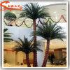 Hot Sale Indoor Decoration Fiberglass Artificial Palm Tree