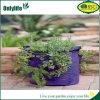 Eco-Frinedly PE Customizable Grow Bag