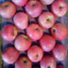 Good Quality of Fresh Qinguan Apple
