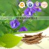 Natural Herb Medicine Scutellaria Baicalensis Huang Qin