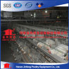 a Type 3 Tiers Automatic Broiler Chicken Cage
