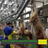 Sheep Slaughterhouse Made in China