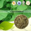 ISO Certificate Herbal Medicine Ginkgo Leaf
