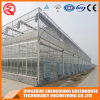Commercial Stainless Steel PC Sheet Greenhouse