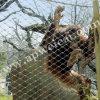 Zoo Fence