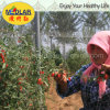 Medlar Goji Berry Wolfberry Vitamin