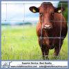 Cheap Livestock Fencing Materials Supplies