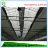 Commercial Galvanized Steel Tunnel Green House for Sale