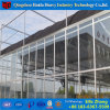 Multispan Commercial Hydroponic Systems Glass Greenhouse for Mushroom