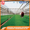 Agriculture Multi Span Polycarbonate Sheet Green House for Planting