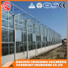 Agriculture Steel Frame PC Sheet Greenhouse