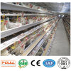 Poultry Farm Chicken Cages System From China