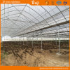 Multi-Span Plastic Film Greenhouse High Light Transmittance