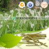Crude Medicine Rhizoma Imperatae Lalang Grass Rhizome
