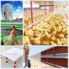 Livestock Machinery with House Construction for Broiler in Hot Sale