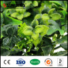 China Suppliers Friendly Plastic Green Garden Wall Plant