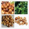 Szechwan Chinaberry Fruit Extract