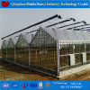 Glass Multi Span Agricultureal Greenhouse Type Cheap Greenhouse