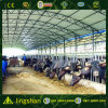Steel Structure Cattle Farm (L-S-053)