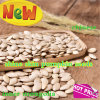 Shine Skin Pumpkin Seeds for Sale