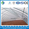 Factory Production Agricultural Greenhouse for Green Vegetables