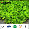 Decorative Garden Boxwood Hedge Plastic Fence