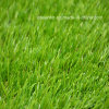 Landscape Plastic Turf Garden Synthetic Grass (AS)