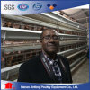 Best Selling a Type Layer Cage for Africa